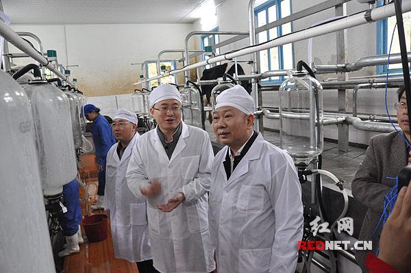 城步县委书记罗建南[右]穿上白大褂,走进一处集中挤奶站。