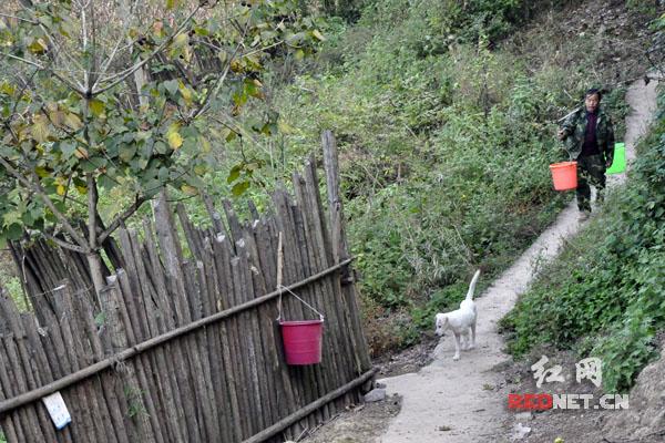 2014年以前,古丈县的向文好一直需要步行到一公里外挑水吃。