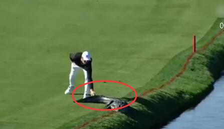 [视频]美国:高尔夫球手比赛中遇鳄鱼 淡定将其赶下水