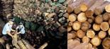 [视频]海关破获木材走私大案:一进一出 逃避23%的税款