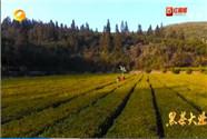 [奋斗吧 新湖南]黑茶大业:新时代的味道