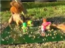 [视频]松鼠为争食物用弹簧玩具弹飞花栗鼠
