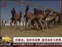[视频]阿联酋:骆驼竞速赛 感受速度与激情
