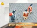 [视频]穿唐装背书包 企鹅一家逛中央大街