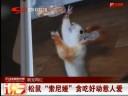 """[视频]松鼠""""索尼娅""""贪吃好动惹人爱"""