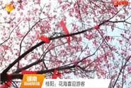 桂阳:花海喜迎游客