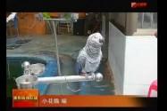 衡阳市动物园:金刚鹦鹉贺新年