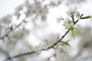 三月长沙:惊蛰时 春雷始 万物长
