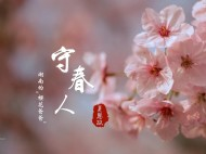 """守春人:日本樱花不再独占鳌头  """"樱花爸爸""""20年潜心挖掘本土樱花"""