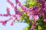 四月|春·花语:写在我如沐春风的心里