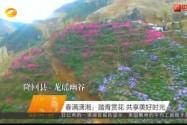 春满潇湘:踏青赏花 共享美好时光