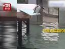 [视频]一只恐高的企鹅宝宝想跳水 简直不能更萌
