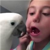 [视频]鹦鹉竟然帮女孩己拔牙 下嘴快准稳
