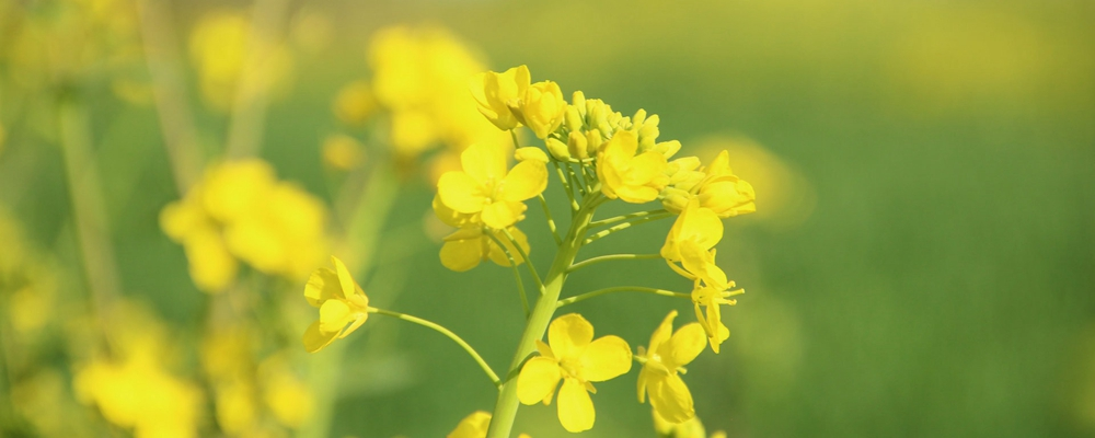 [视频]春暖花开 正是赏花好时节